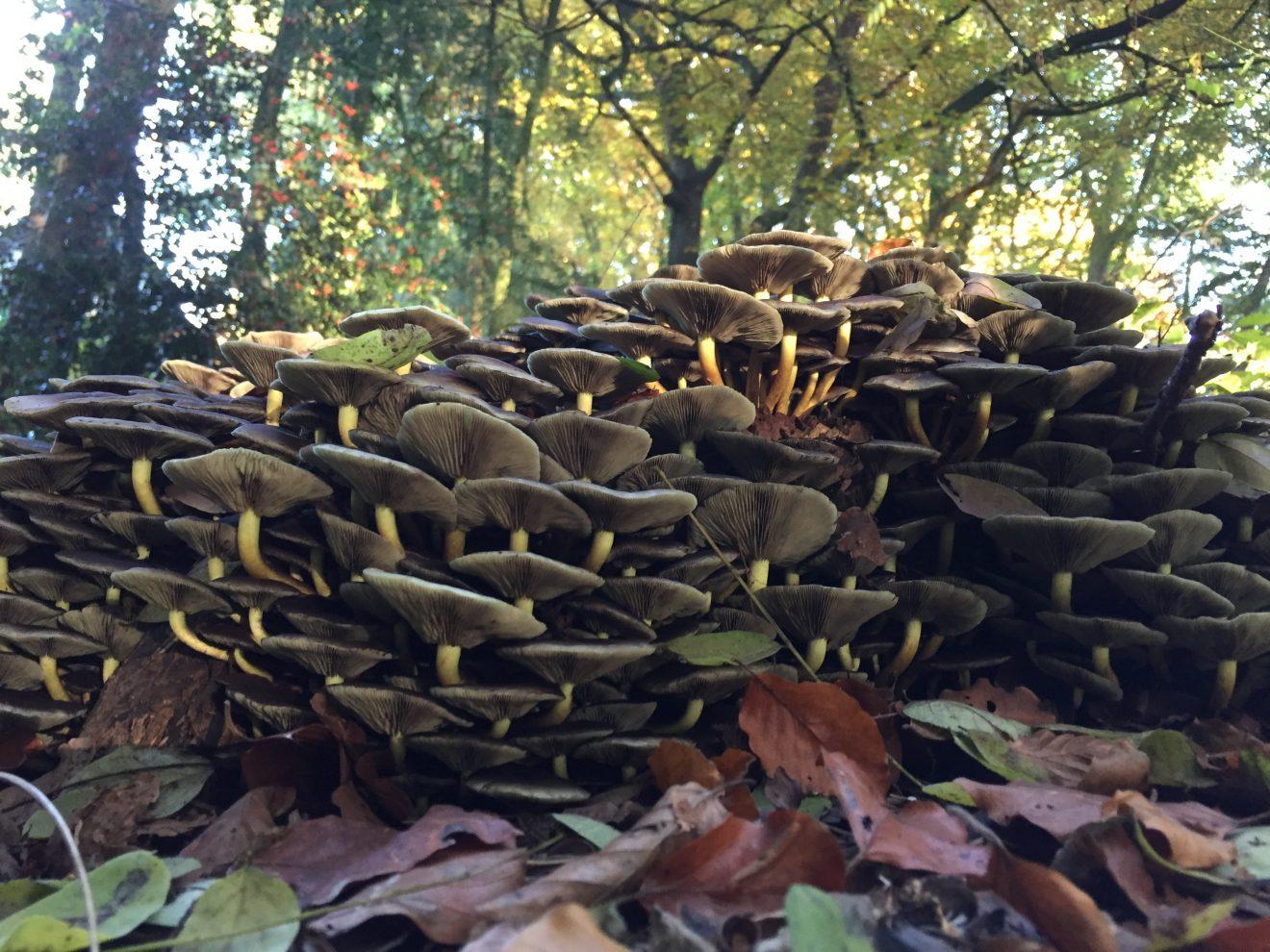 Wandelen onder leiding van een gids met als thema: Proef de herfst in het buurtbosch