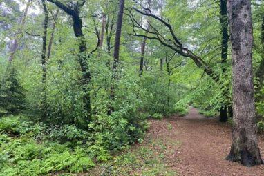 Leerzame wandeling over bosbeheer en cultuurhistorie:        12 juni a.s.