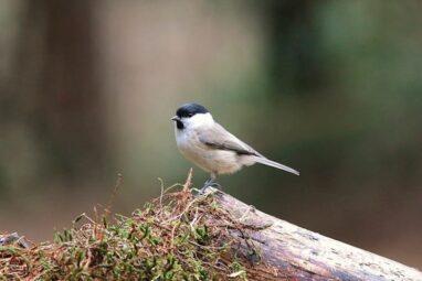 Natuurwandelingen in het Luntersche Buurtbosch